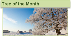 home tree month