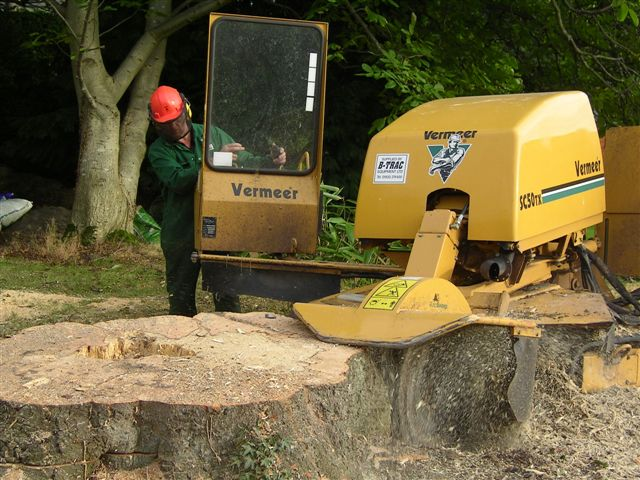 12.Grinding Beech Stump OBH-49