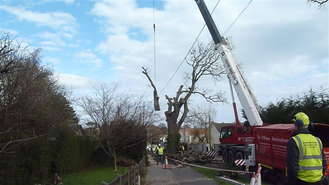 50 Local Authority Tree REmoval by Crane-17
