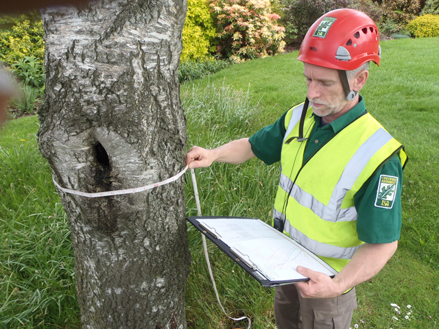 66. Surveying Health   Safety of Trees-68